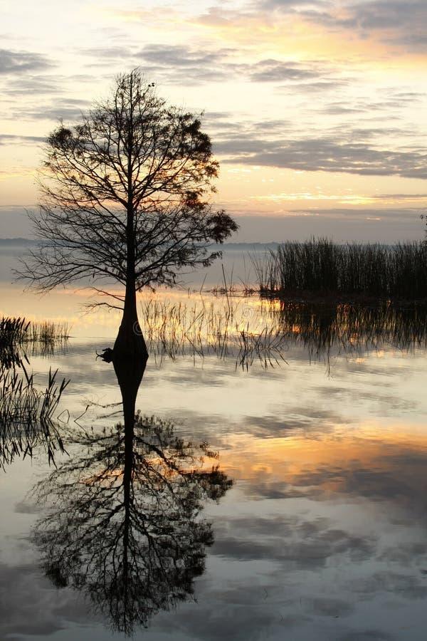 Árbol de Cypress de la caída reflejado en la salida del sol fotografía de archivo libre de regalías