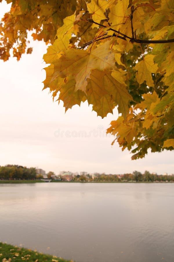 Árbol de descoloramiento en orilla del lago imagen de archivo libre de regalías