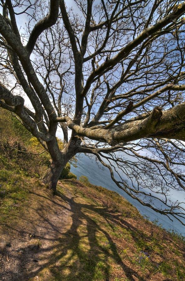 Árbol de Destinty imagen de archivo