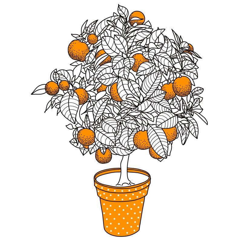 Árbol de fruta cítrica de la mandarina, de la naranja o del limón de la fruta cítrica en un pote ilustración del vector