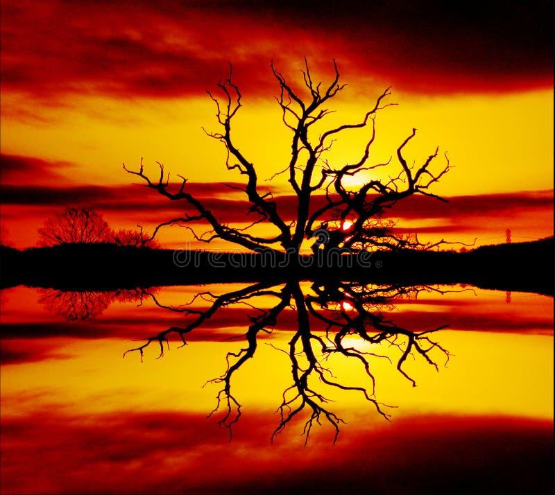 Árbol de fuego stock de ilustración