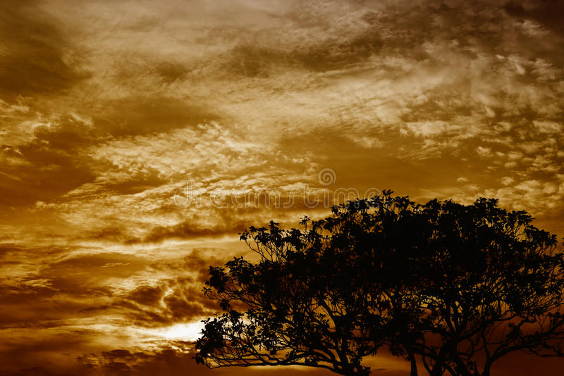 Árbol de goma foto de archivo libre de regalías