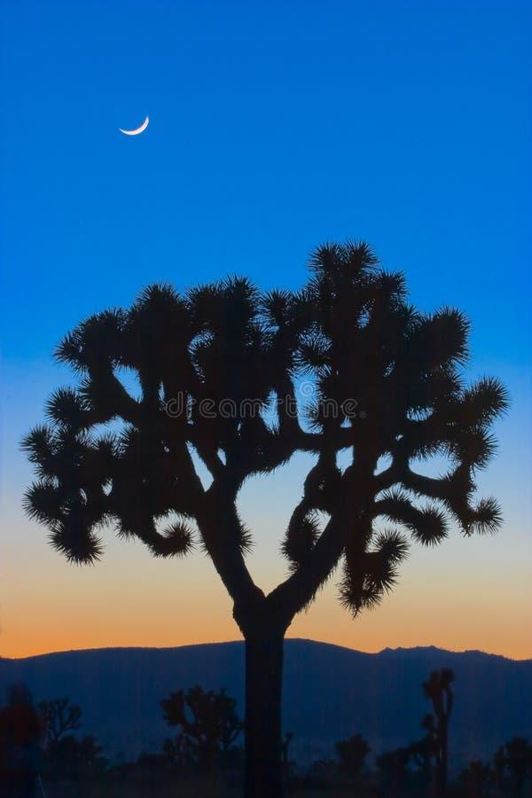Árbol de Joshua y la Luna Nueva foto de archivo
