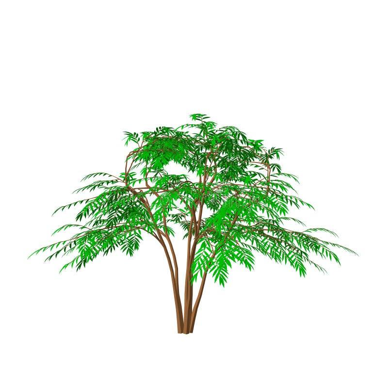 Árbol de la aralia Aislado en el fondo blanco illustratio del vector 3d libre illustration