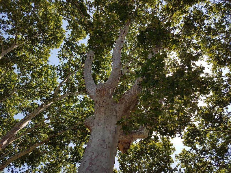 Árbol de la buena sombra fotos de archivo libres de regalías