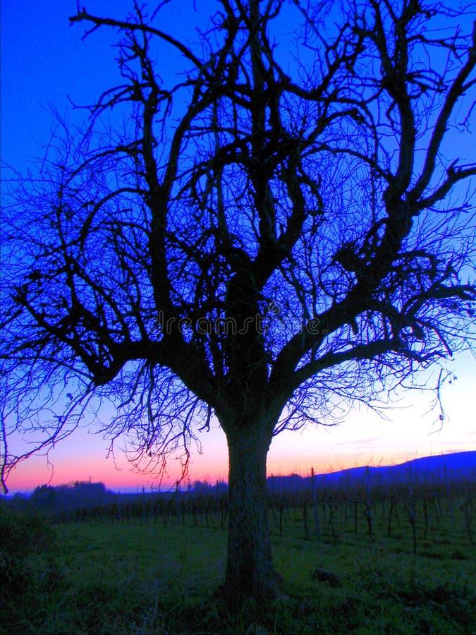 Árbol de la caída en puesta del sol foto de archivo