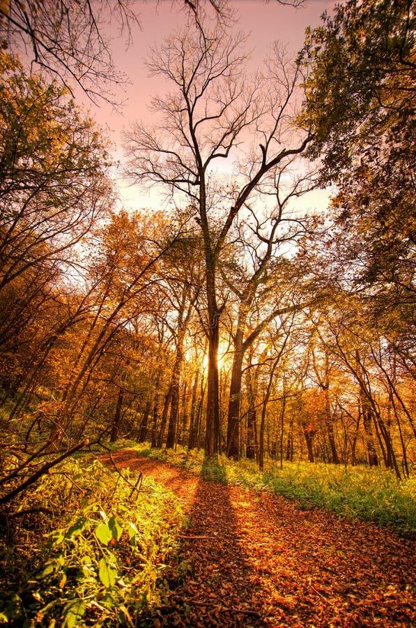 Árbol de la caída, Nebraska fotos de archivo