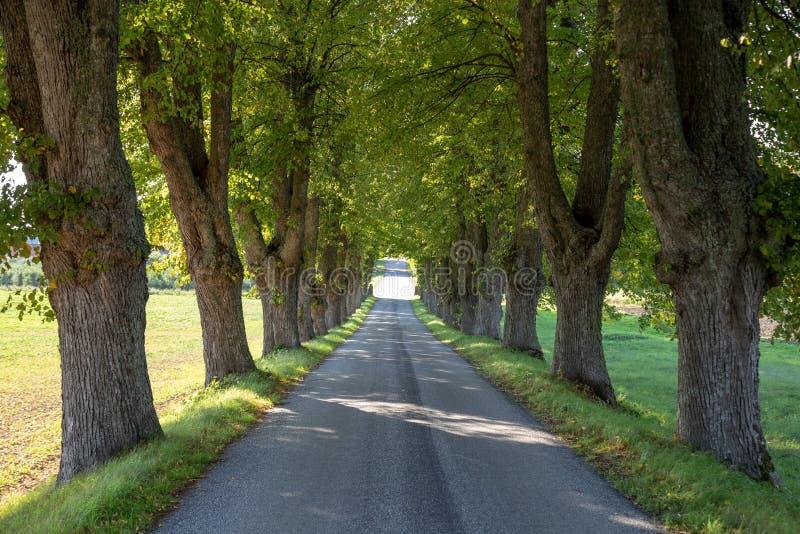 Árbol de la carretera nacional alineado fotografía de archivo