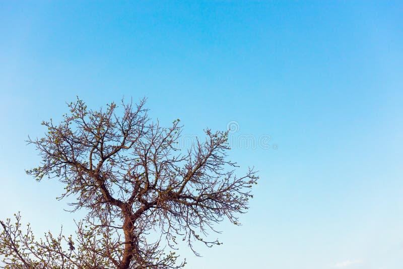 Árbol de la corona fotos de archivo libres de regalías