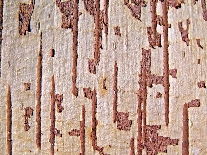 Download Árbol de la corteza imagen de archivo. Imagen de bosque - 7150829