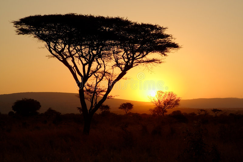 Árbol de la espina en la puesta del sol imagenes de archivo