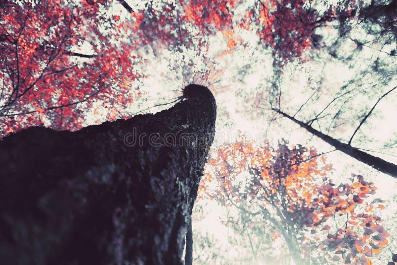 Árbol de la estación del ángulo bajo en un bosque imagen de archivo