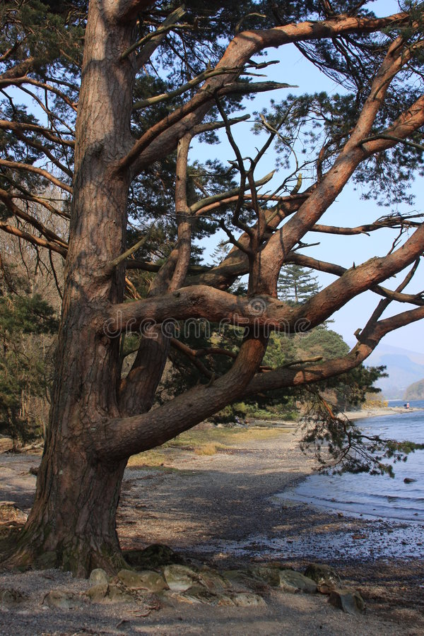 Árbol de la línea de la playa fotos de archivo
