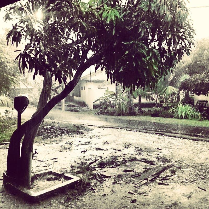 Árbol de la lluvia fotografía de archivo