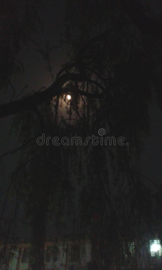 Árbol de la luz de luna foto de archivo