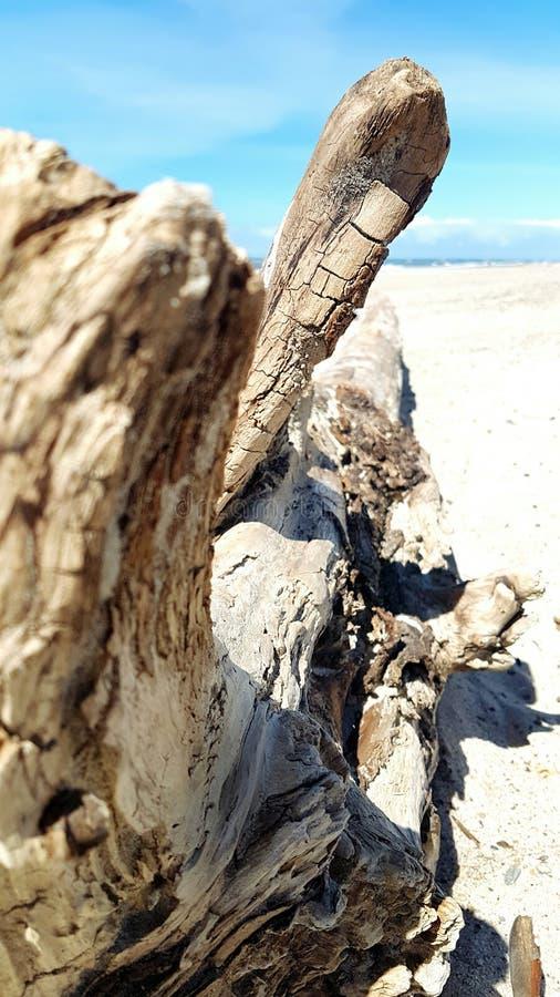 Árbol de la madera de deriva en la playa fotografía de archivo