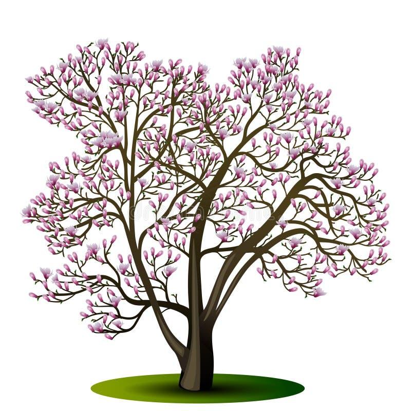 Árbol de la magnolia con las flores rosadas stock de ilustración