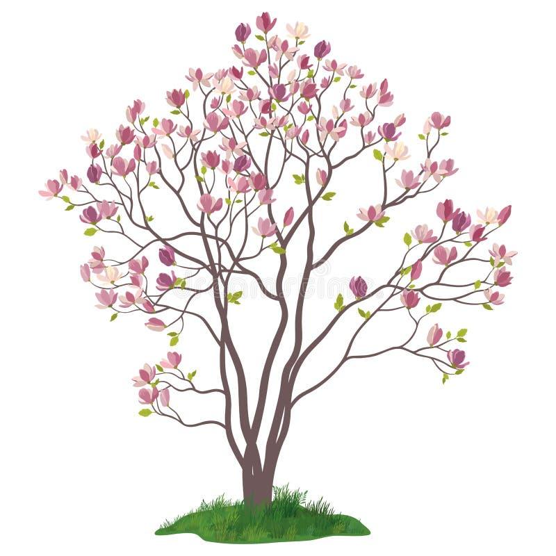 Árbol de la magnolia con las flores y la hierba stock de ilustración