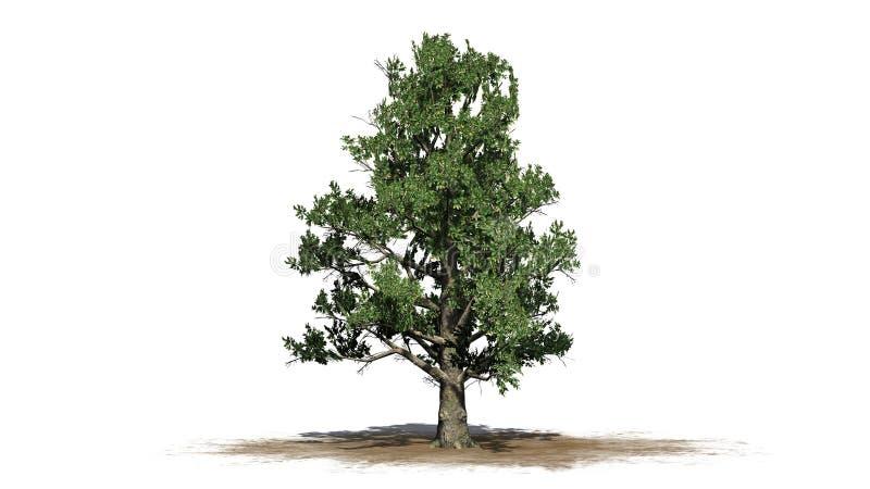 Árbol de la magnolia meridional libre illustration