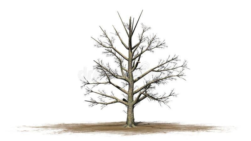 Árbol de la magnolia meridional en el invierno ilustración del vector