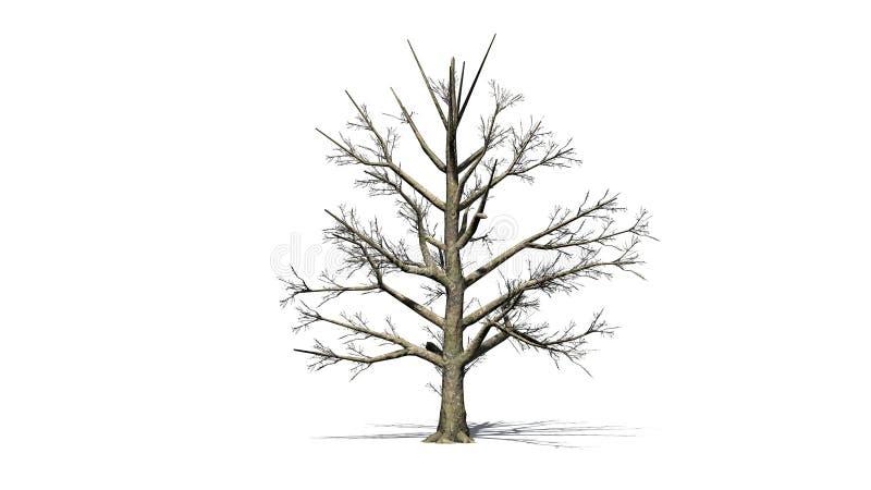 Árbol de la magnolia meridional en el invierno stock de ilustración