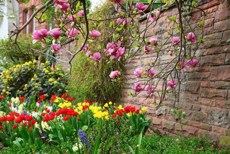 Rbol de la magnolia que crece cerca de la pared de piedra for Arboles de hoja perenne que crece rapido