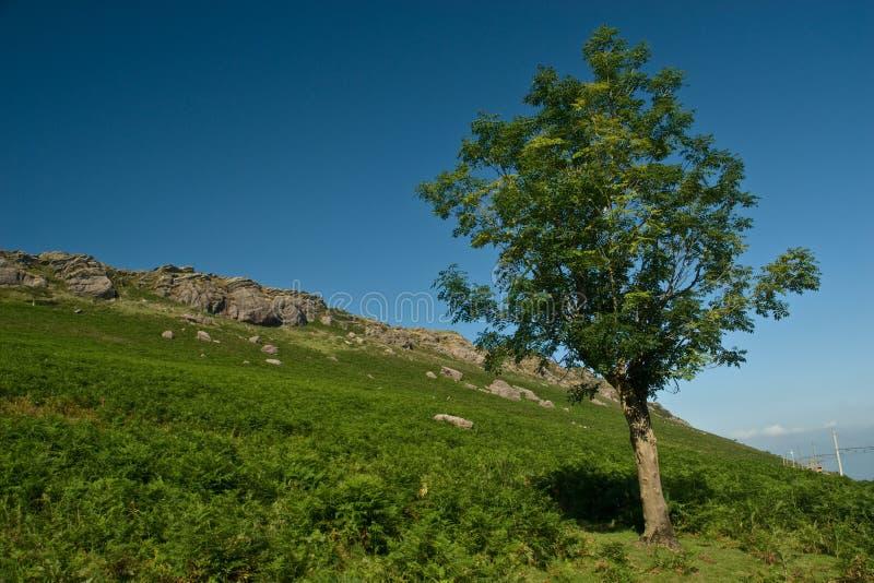 Árbol de la montaña imagenes de archivo