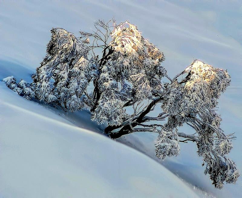 Árbol de la nieve foto de archivo