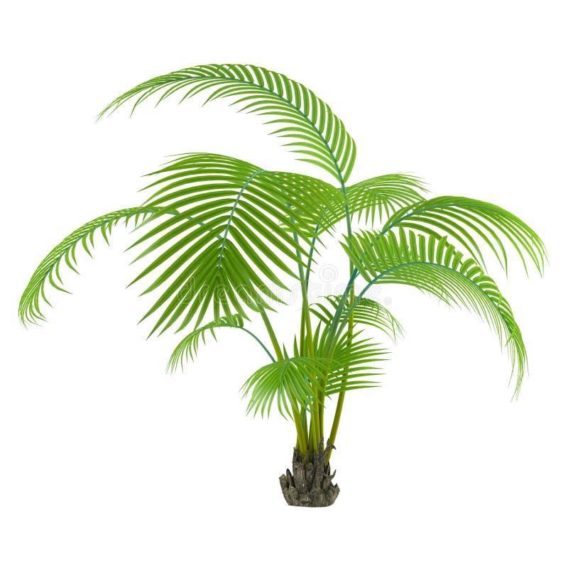 Árbol de la planta de la palma ilustración del vector