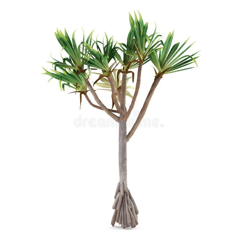 Árbol de la planta de la palma aislado. Utilis del Pandanus fotos de archivo