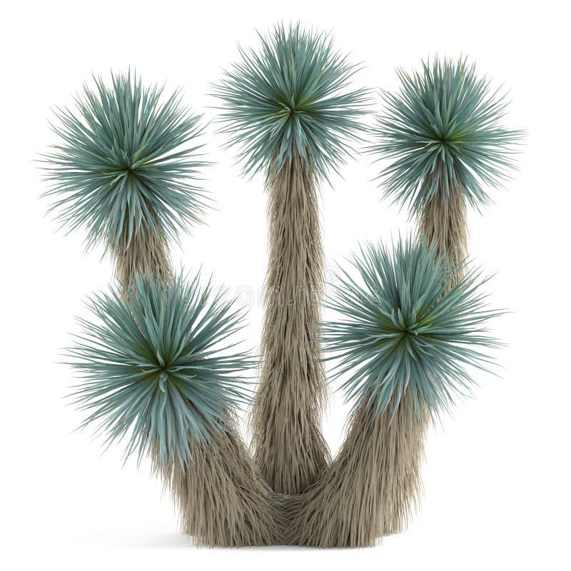 Rbol de la planta de la palma aislado yuca elat stock de for Arboles para plantar en verano