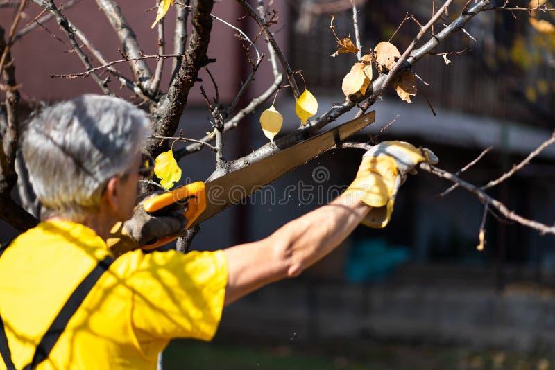 Árbol de la poda del hombre que corta viejas ramas con una sierra fotos de archivo