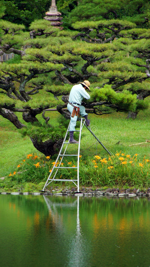 Árbol de la poda en Ritsurin Koen Garden Takamatsu Japan imagenes de archivo