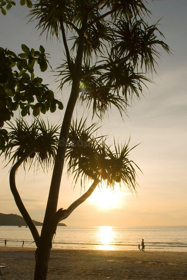 Árbol de la puesta del sol en la playa de Patong fotografía de archivo
