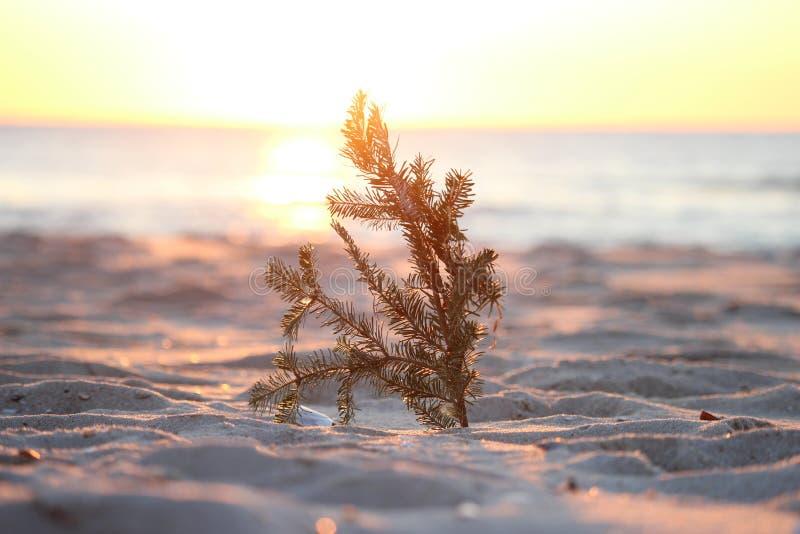 Árbol de la salida del sol fotografía de archivo