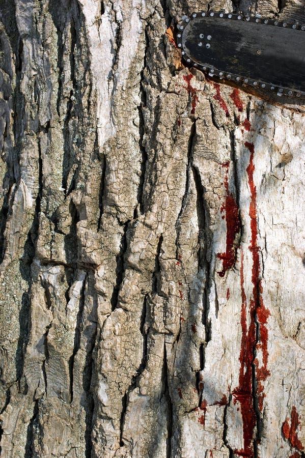 Árbol de la sangría imagen de archivo