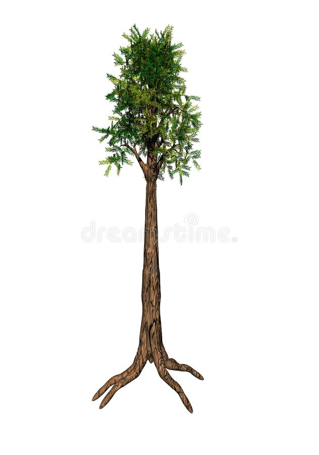 Árbol de la secoya ilustración del vector