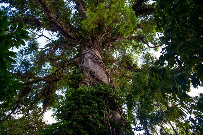 Árbol de la selva fotografía de archivo