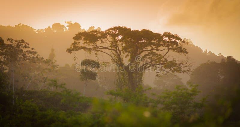 Árbol de la selva fotografía de archivo libre de regalías