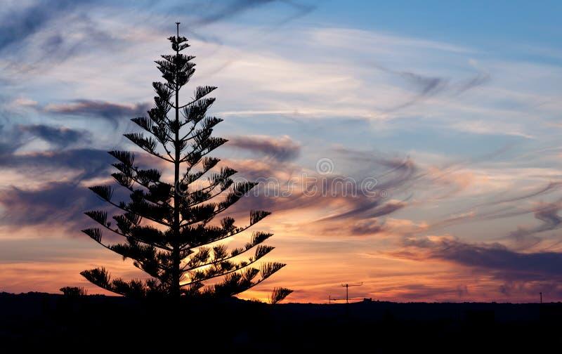Árbol de la silueta foto de archivo libre de regalías