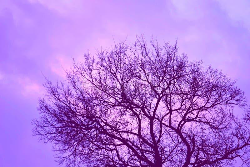Árbol de la tarde en el país imagen de archivo libre de regalías