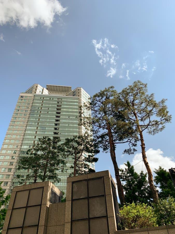 Árbol de la torre y el fondo del cielo imagenes de archivo