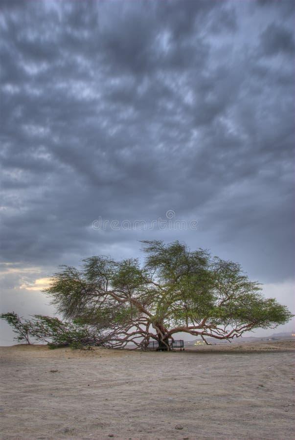 Árbol de la vida 2 foto de archivo