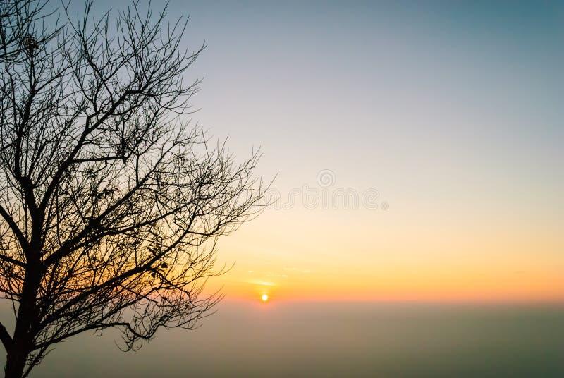 Árbol de las hojas de la vertiente de la silueta contra la subida del sol del despejado imagen de archivo libre de regalías