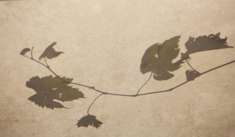 Árbol de las uvas foto de archivo