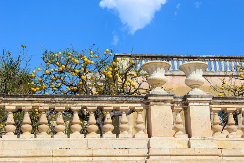 Árbol de limón en terraza histórica en el cuadrado de Piazza Duomo en Syracuse, Sicilia, Italia El cuadrado histórico principal imagen de archivo libre de regalías