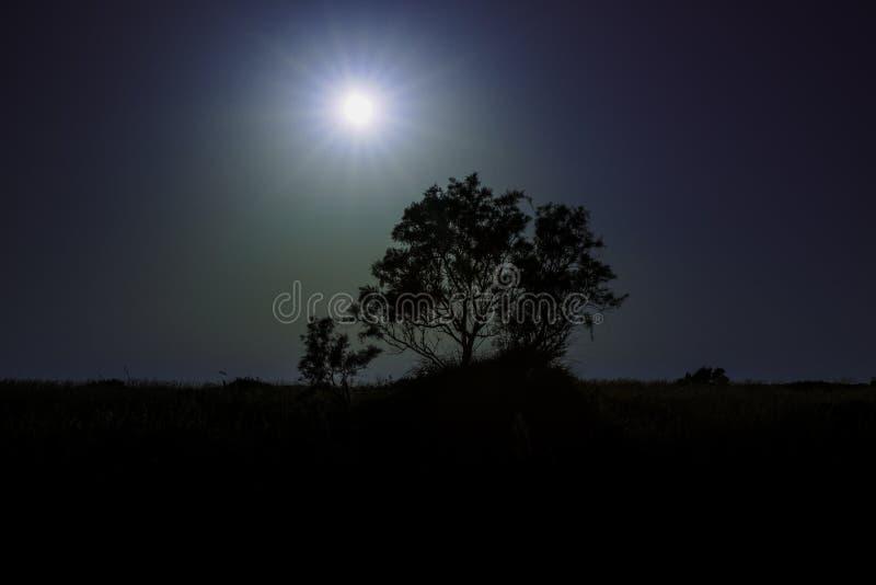 Árbol de Loneley imagen de archivo libre de regalías