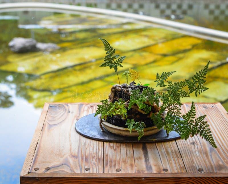 Árbol de los bonsais en el jardín botánico imagenes de archivo