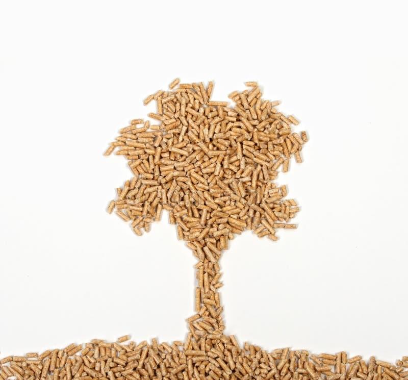 Árbol de madera de la pelotilla fotografía de archivo libre de regalías
