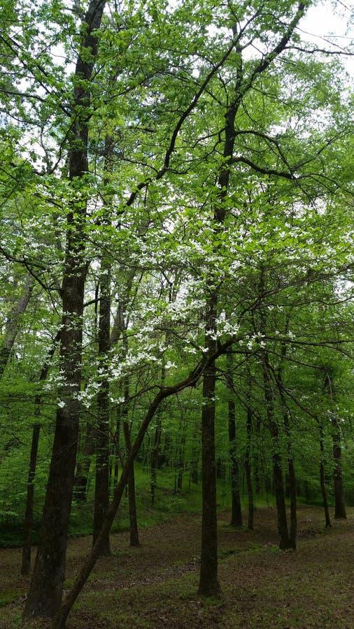 Árbol de madera del perro imagen de archivo
